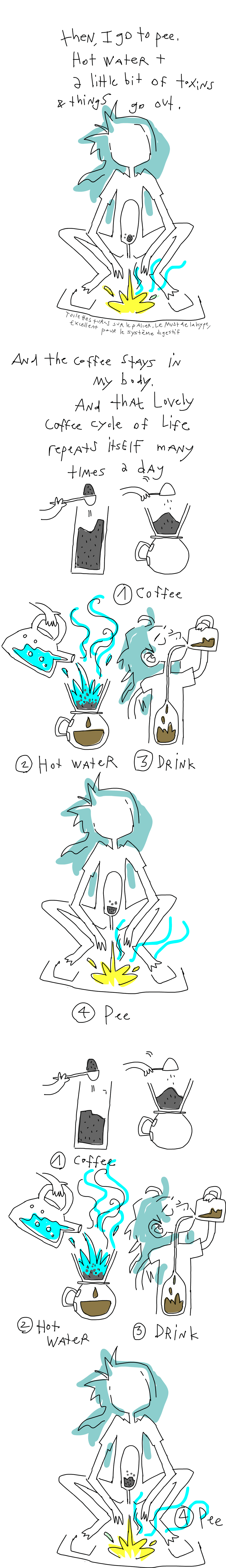 Hot water plus a little bit of toxin thingies get out my body. And the coffee stays. And that lovely cycle of coffee drinks repeats itself many times during the day.
